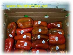 red peppers from netherlands